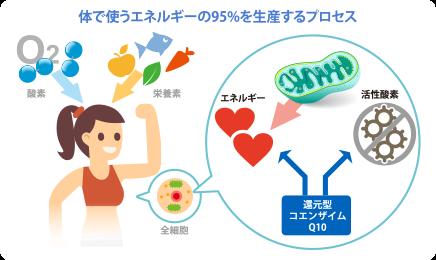 体で使うエネルギーの95%を生産するプロセス